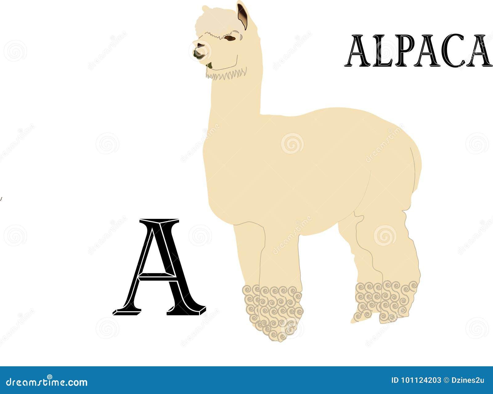 Το Α είναι για τη προβατοκάμηλο