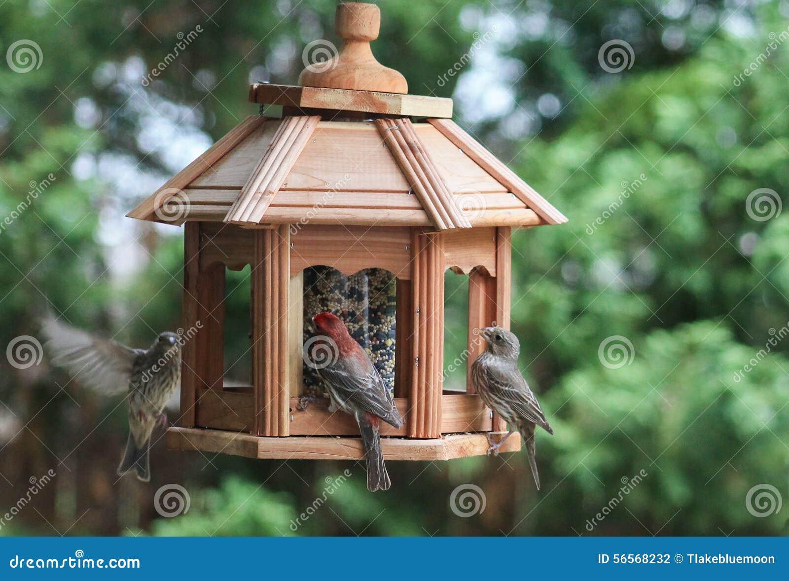 Download Το γεύμα πουλιών πίνακας-finches-παρουσιάζει Στοκ Εικόνες - εικόνα από σίτιση, πίνακας: 56568232