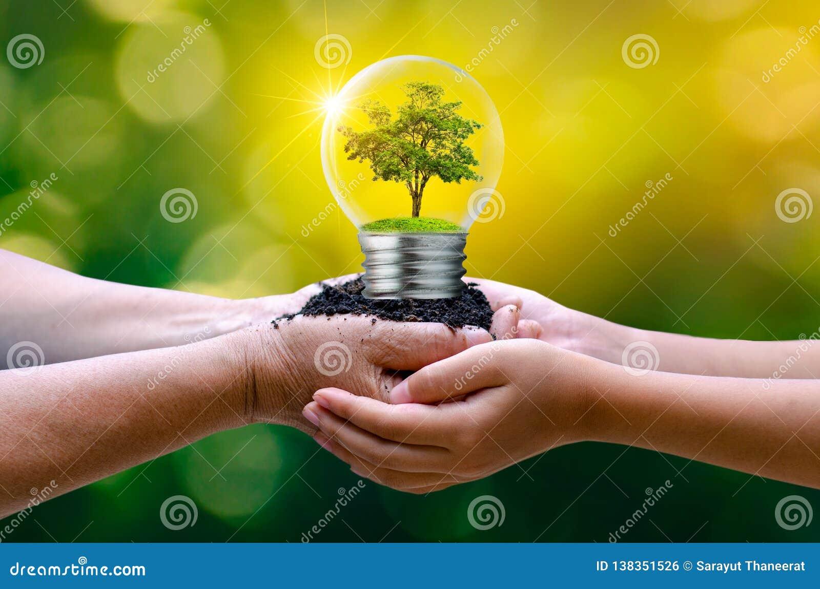 Το δάσος και τα δέντρα είναι στο φως Έννοιες της περιβαλλοντικής συντήρησης και των σφαιρικών θερμαίνοντας εγκαταστάσεων που αυξά