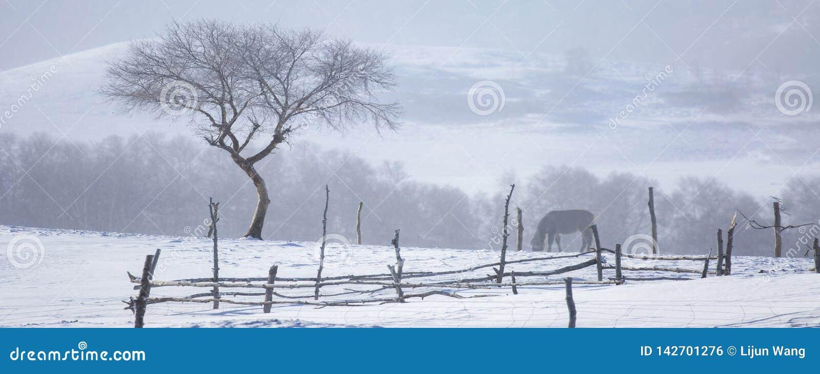 Το δέντρο στο χιόνι