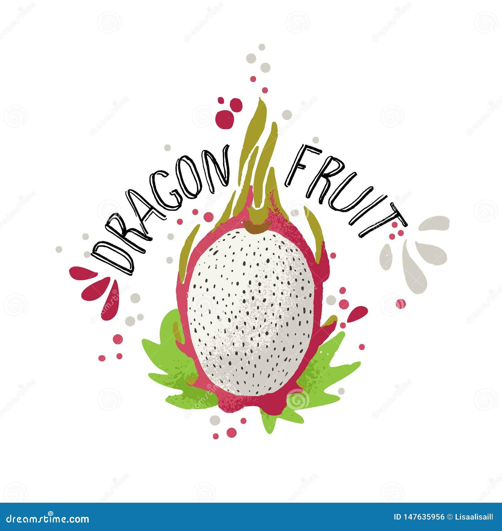 Το διανυσματικό χέρι σύρει τη χρωματισμένη απεικόνιση φρούτων δράκων Άσπρο και κόκκινο dragonfruit με τα κόκκαλα πολτού και φρούτ