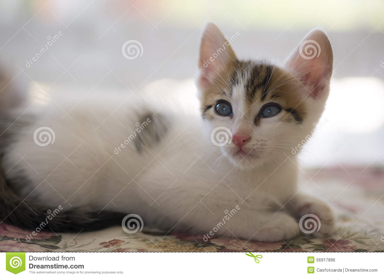 Το λευκό η γάτα