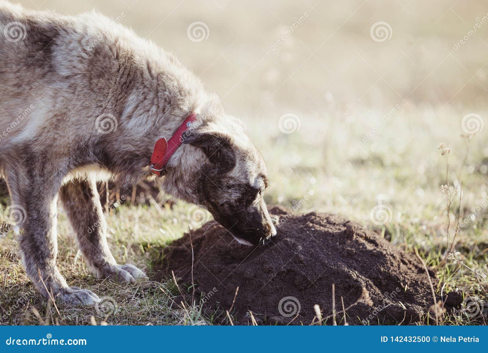 Το ευτυχές υιοθετημένο περιπλανώμενο σκυλί, υιοθετεί δεν ψωνίζει