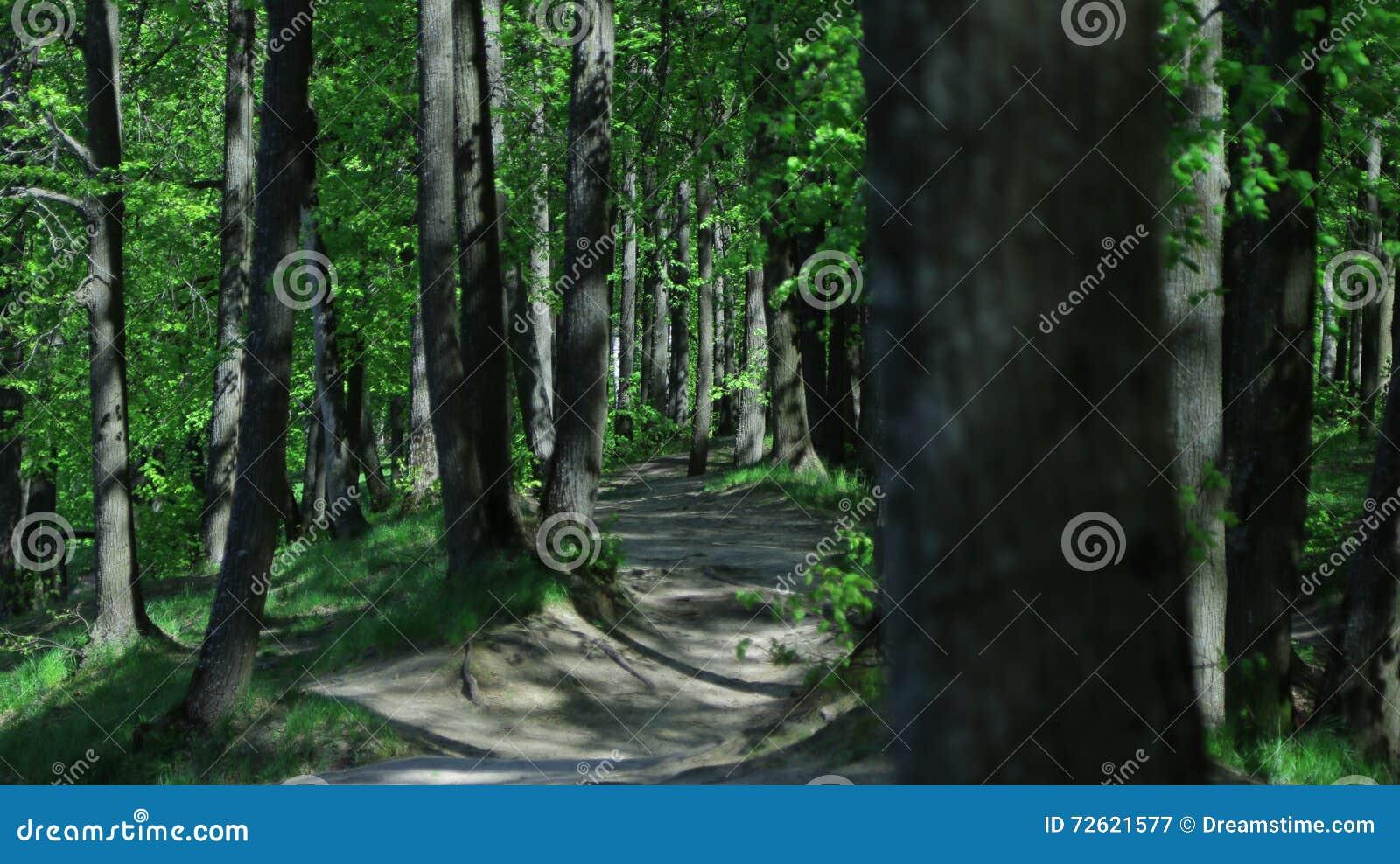 Το καλοκαίρι το δάσος κατά τη διάρκεια της θερμότητας