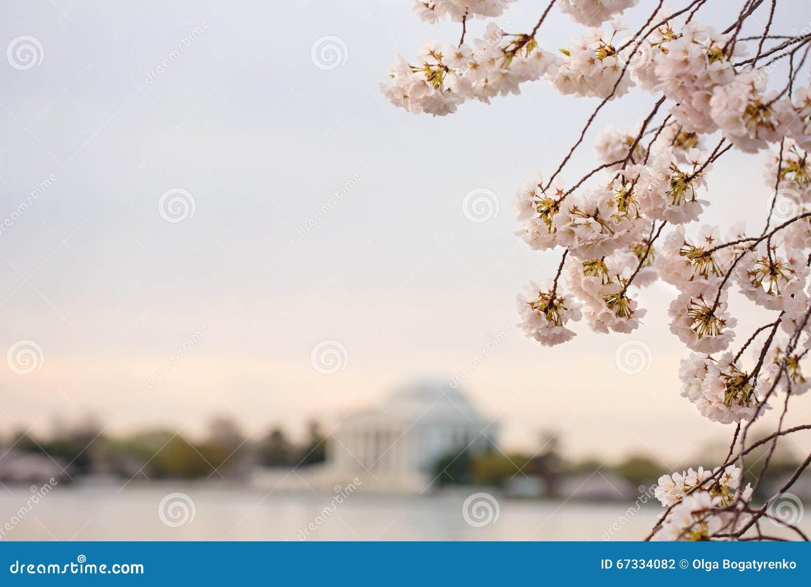 Το κεράσι ανθίζει ανατολή του Washington DC