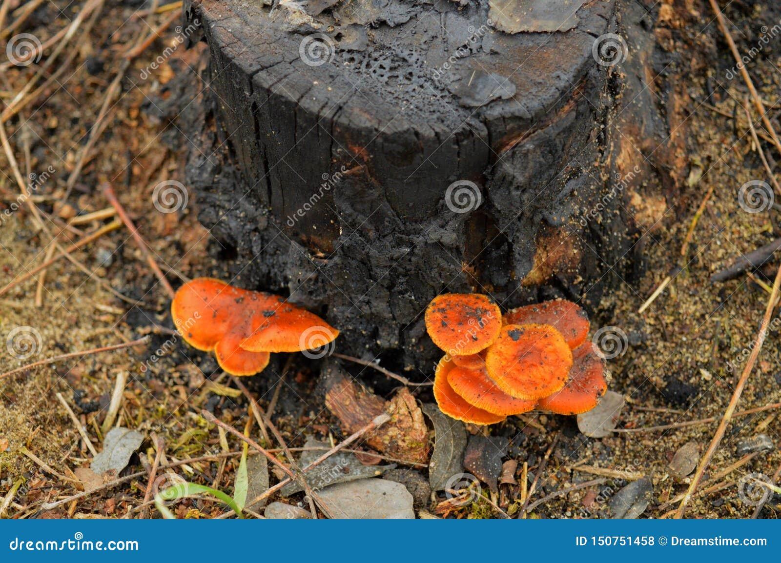 Το κολόβωμα με τα μανιτάρια στο δάσος