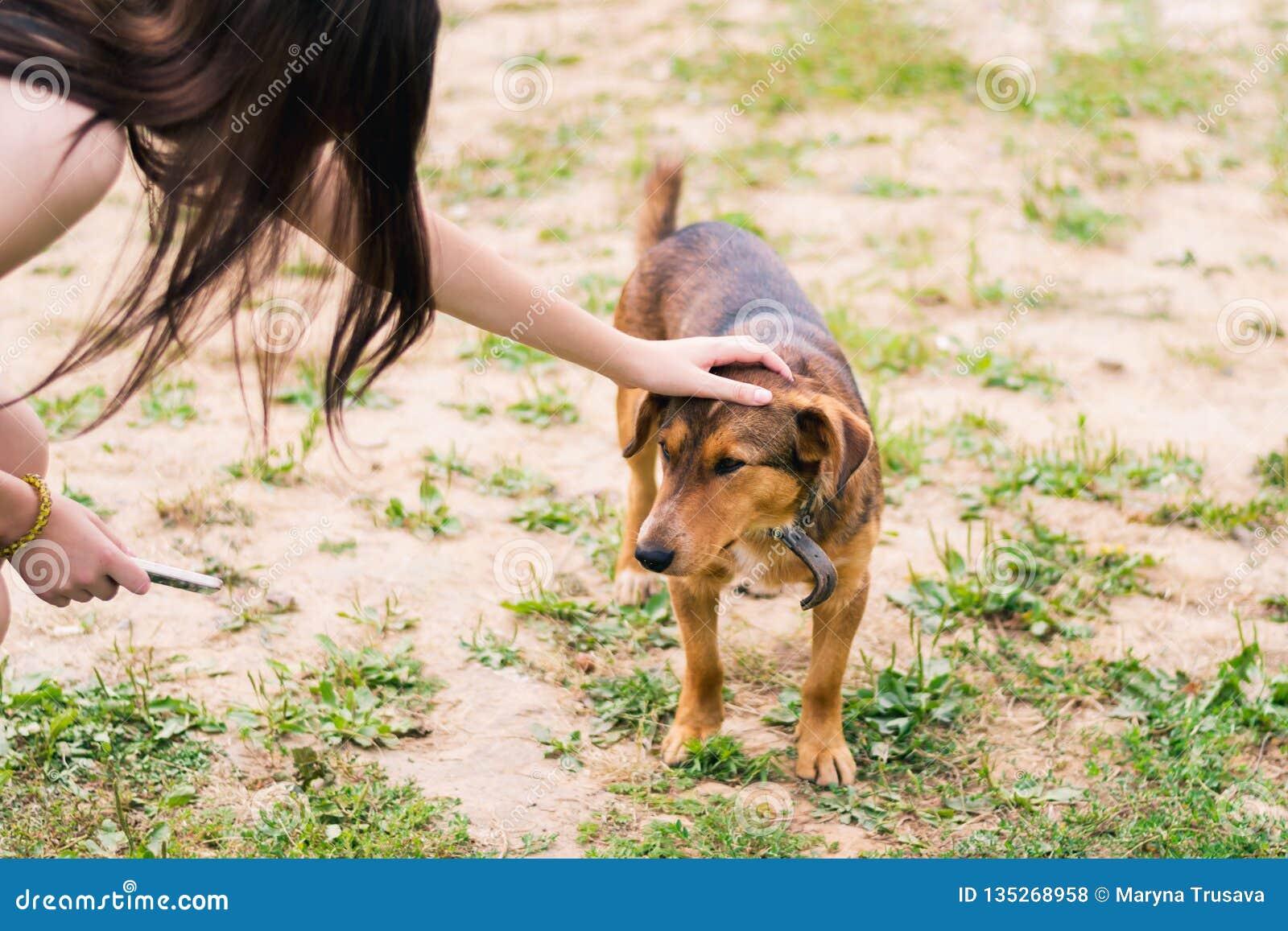 Το κορίτσι κτυπά το κεφάλι του καφετιού ομαλός-μαλλιαρού σκυλιού σε ένα περιλαίμιο