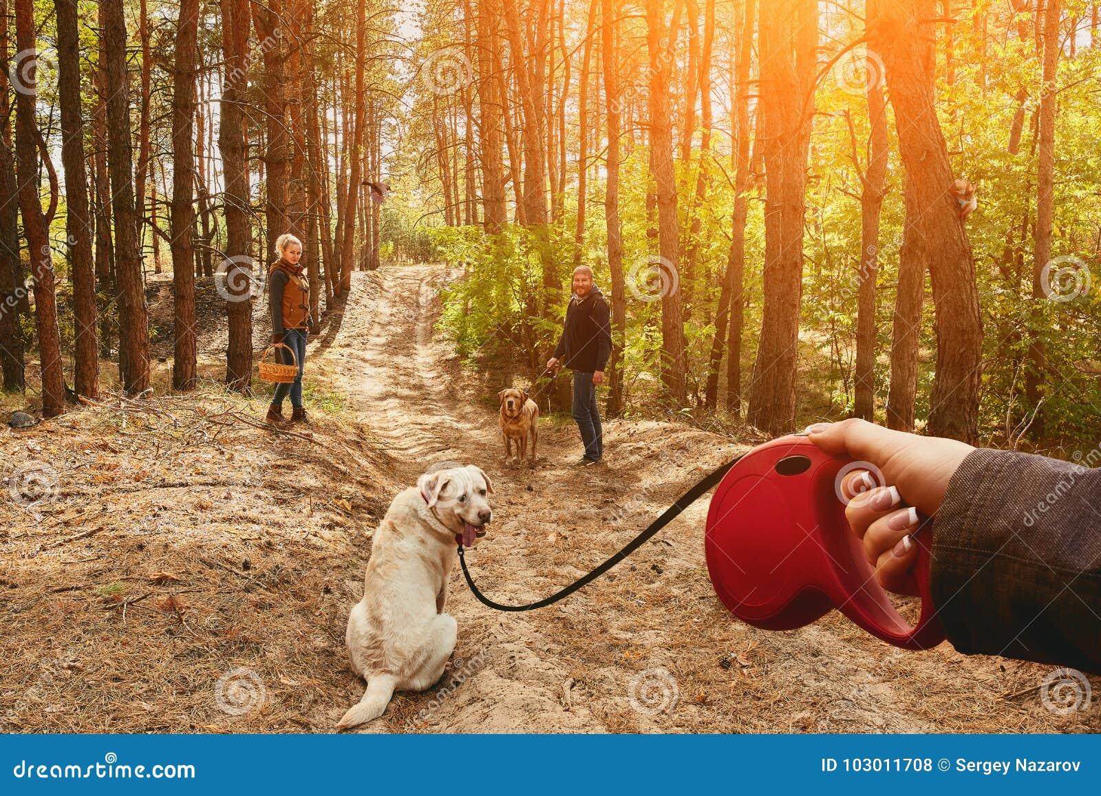 Το κορίτσι σε ένα λουρί οδηγεί ένα σκυλί του Λαμπραντόρ, το οποίο γυρίζει γύρω και εξετάζει τη κάμερα