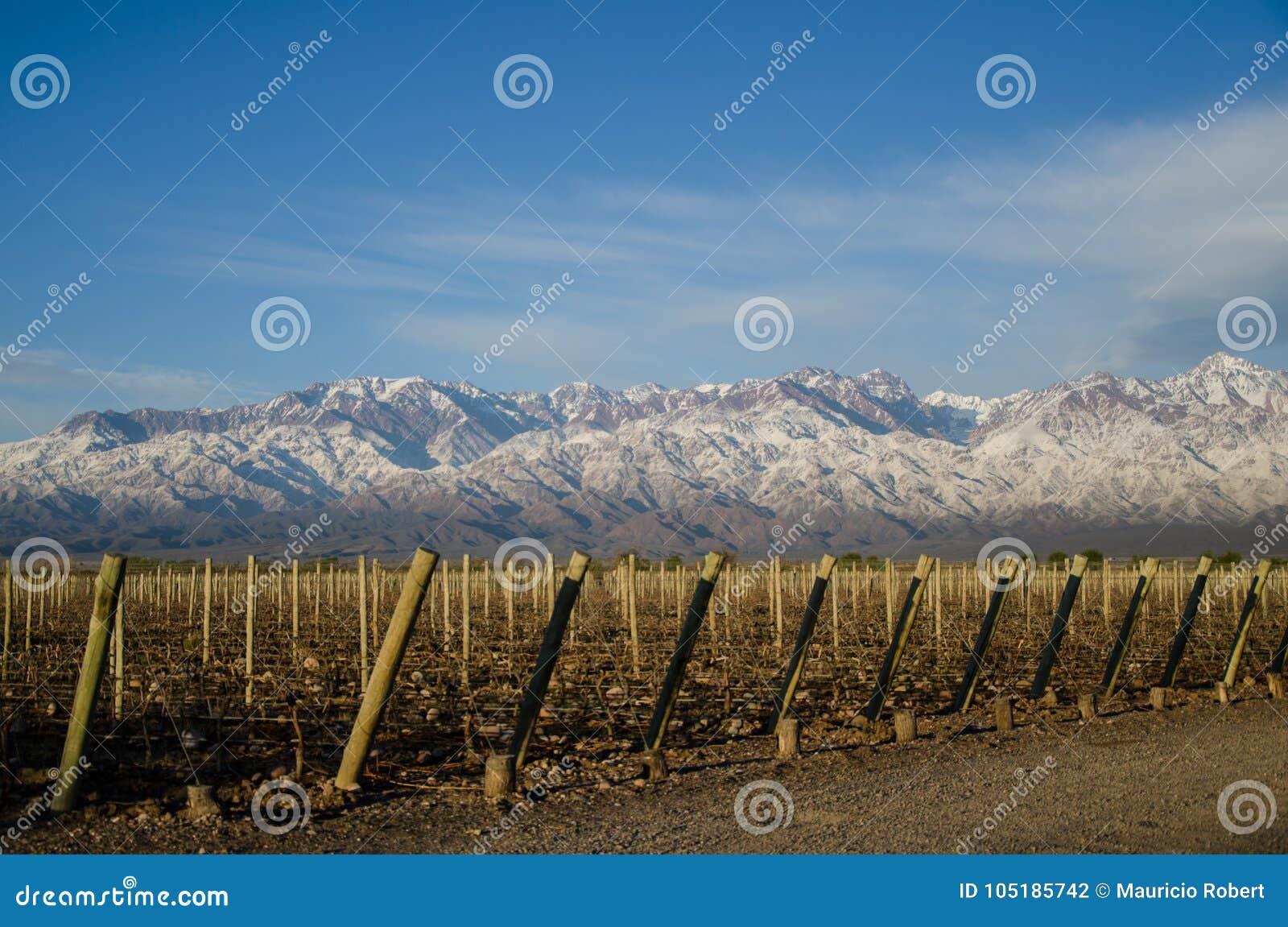 Το κρασί βουνών
