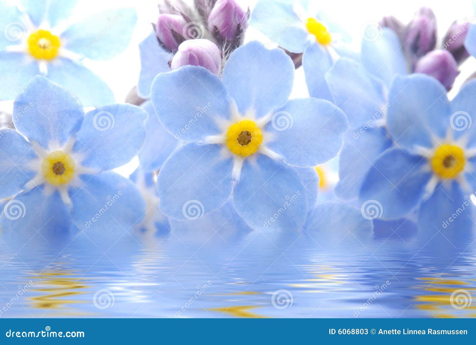 το λουλούδι με ξεχνά όχι