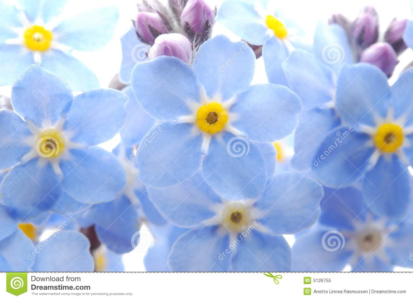 το μπλε λουλούδι με ξεχ