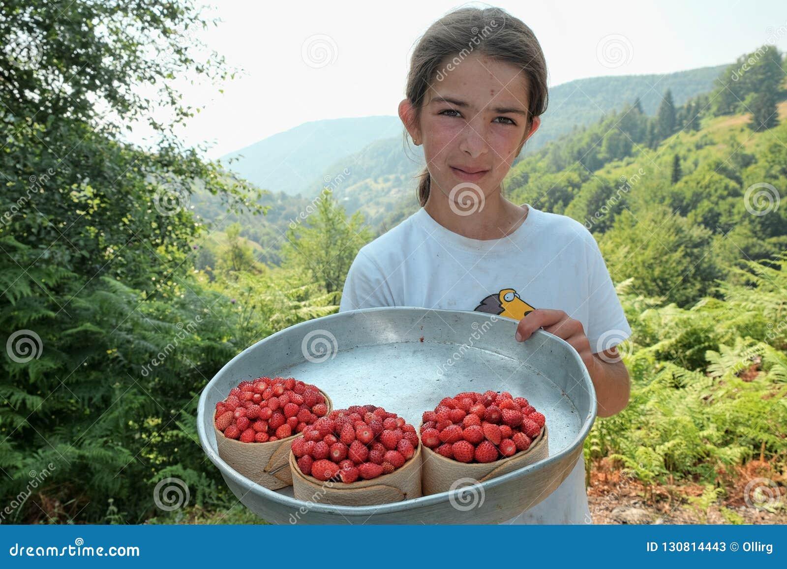 Το νέο κορίτσι μου παρουσιάζει κάποιο σύνολο καλαθιών των άγριων φραουλών, των τοπικών φρούτων του βουνού Tresnjevik μεταξύ Andri