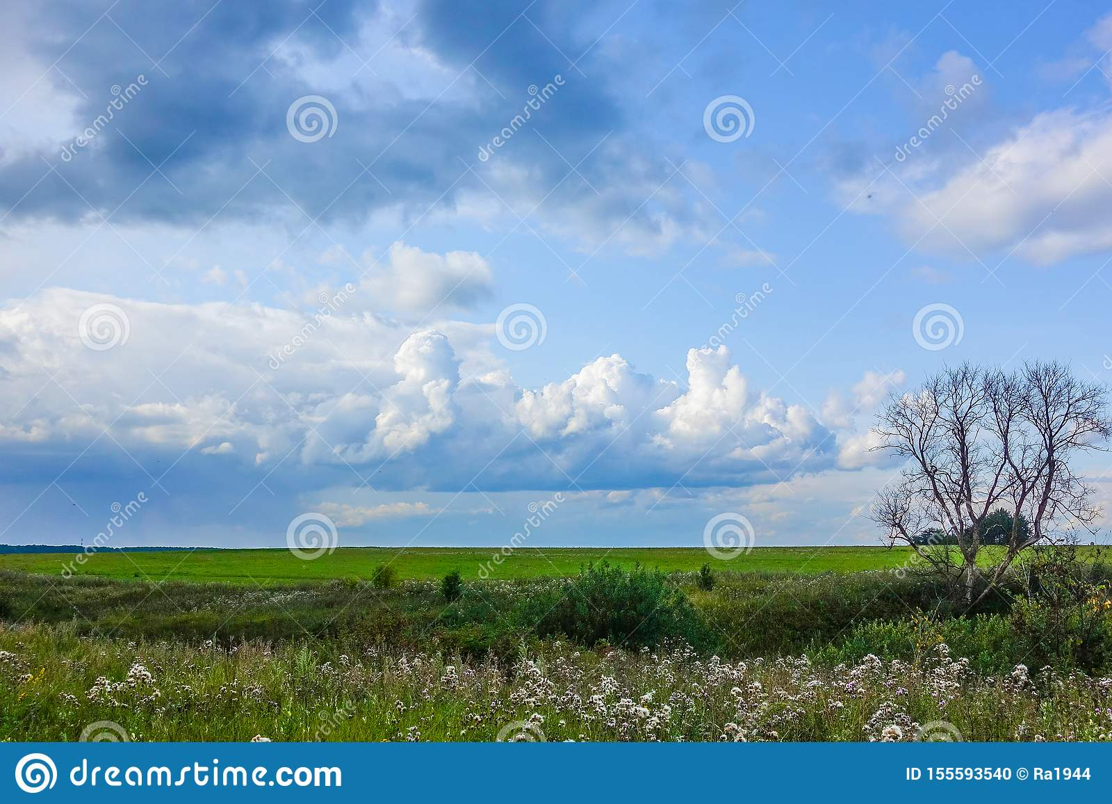 Το ξηρό μεγάλο μόνο δέντρο σε έναν πράσινο τομέα Ο ουρανός με τα σύννεφα r