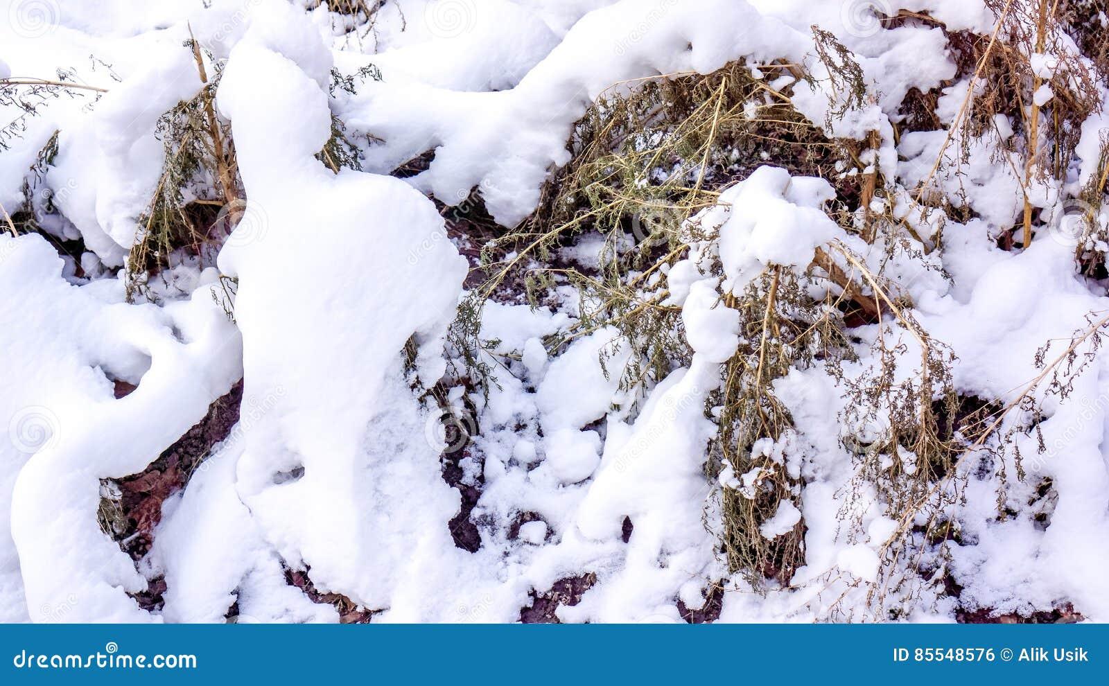 Το περασμένο φθινόπωρο πράσινη χλόη κάτω από τον πρώτα σαφή άσπρο τάπητα χιονιού Χλόη και φύλλα φθινοπώρου κάτω από το πρώτο χιόν