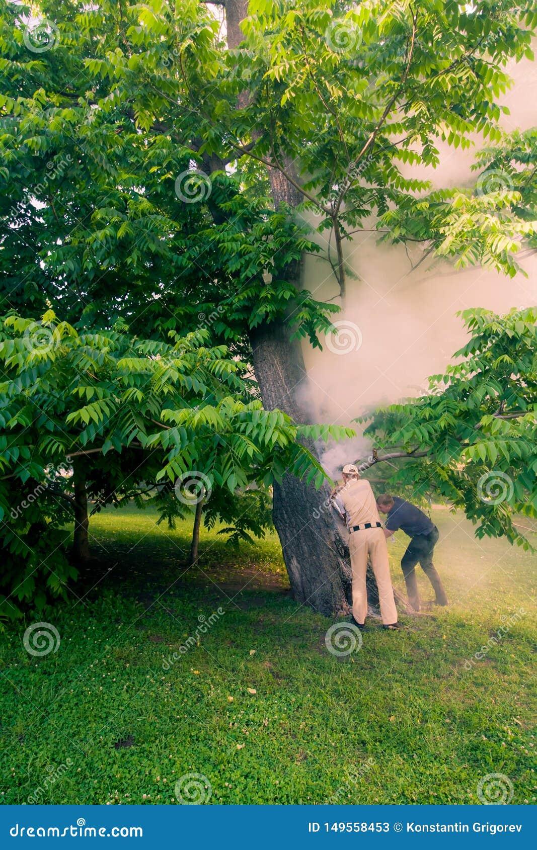 Το προσωπικό πάρκων εξαφανίζει το βράσιμο στον ατμό του ξύλου ο κορμός καίει μέσα