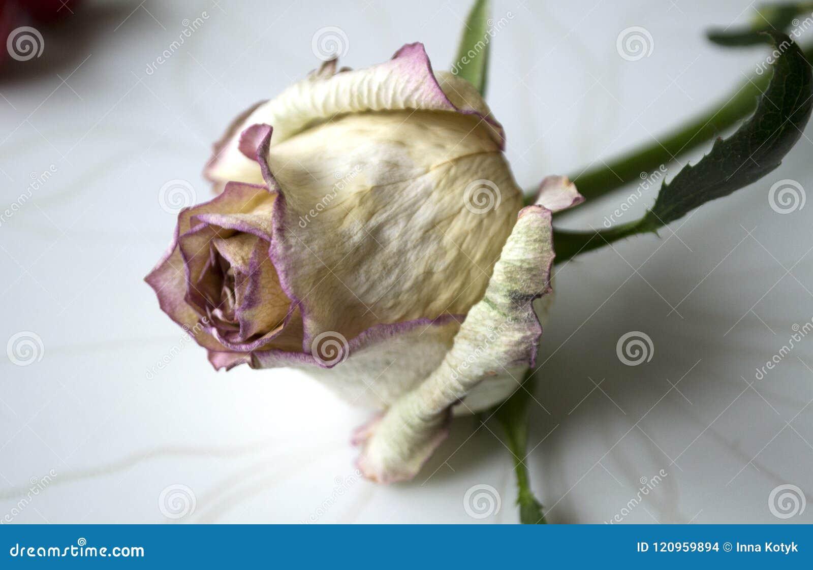 Η χρυσή του λουλούβιλ