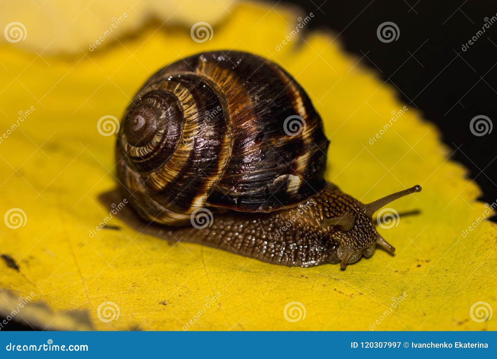 Το σαλιγκάρι είναι μοναδικό ζωντανό πλάσμα που προστατεύεται από ένα κοχύλι και μπορεί να ζήσει όχι μόνο στις άγρια περιοχές, αλλ