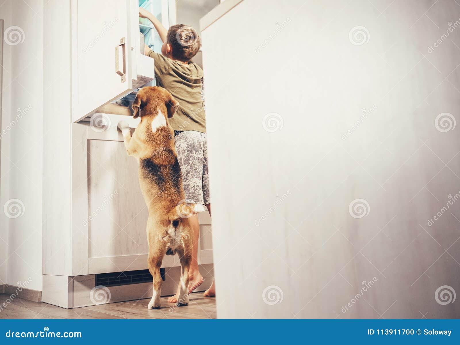 Το σκυλί αγοριών και λαγωνικών φαίνεται κάτι εύγευστο στο ψυγείο