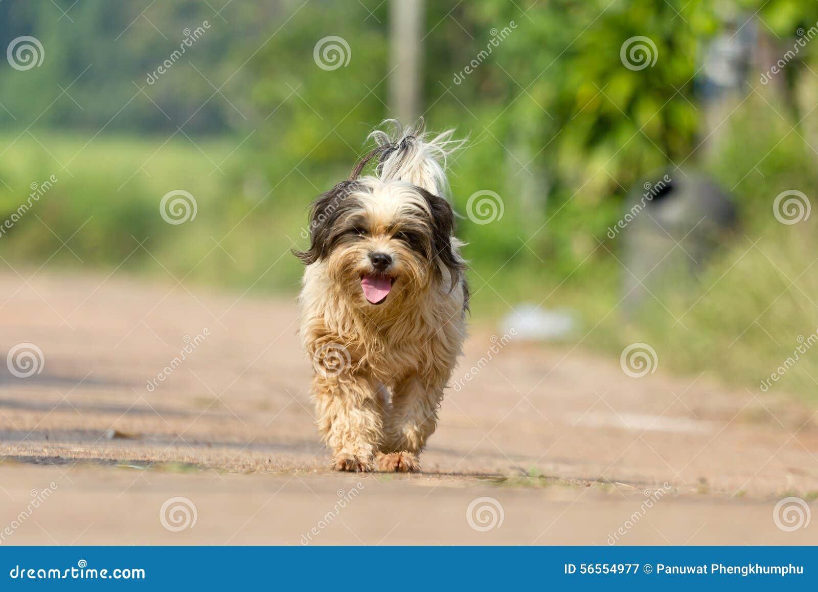 Download Το σκυλί που τρέχει ή που περπατά στο δρόμο Στοκ Εικόνα - εικόνα από πράσινος, χρυσός: 56554977