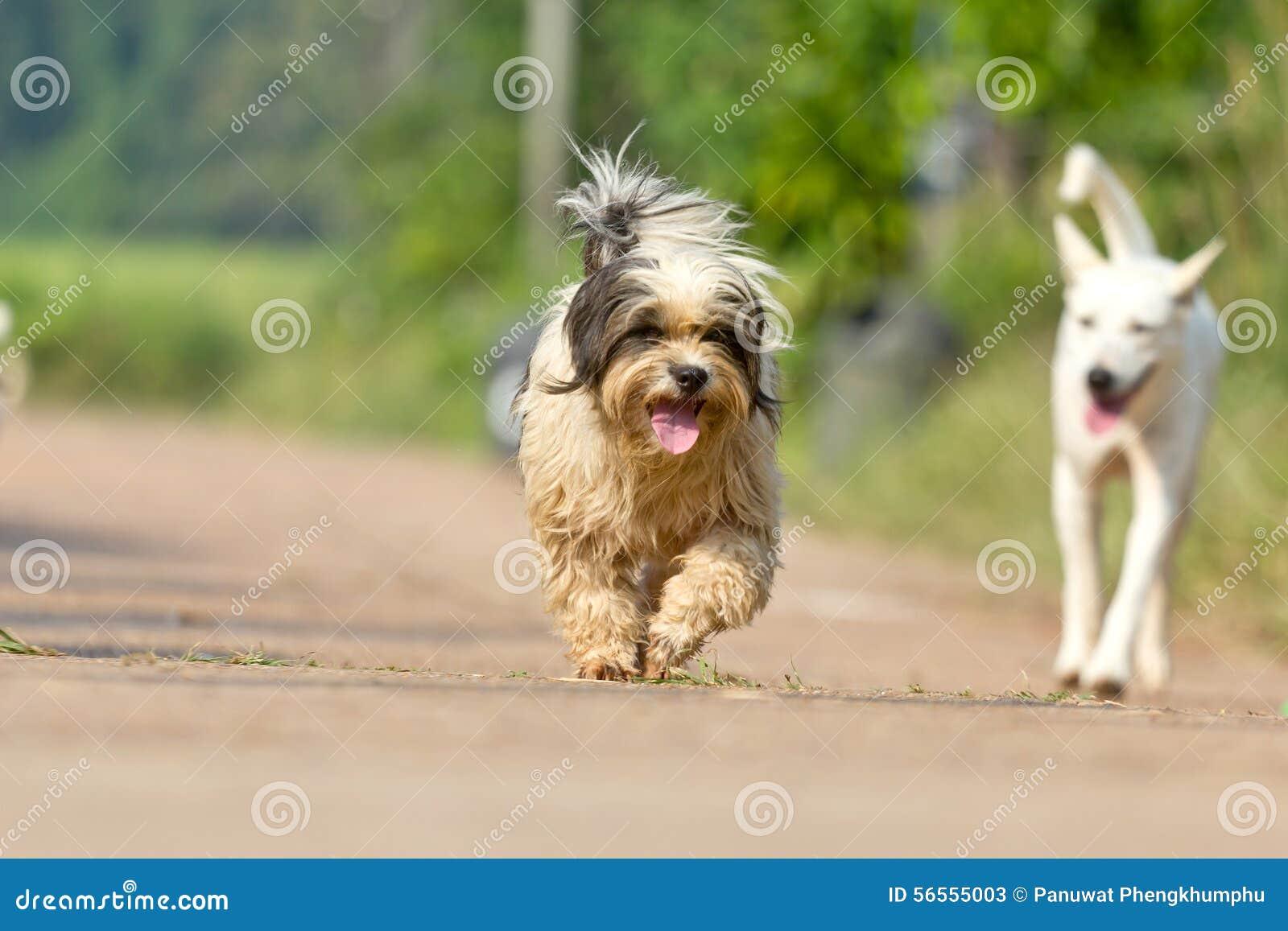 Download Το σκυλί που τρέχει ή που περπατά στο δρόμο Στοκ Εικόνα - εικόνα από ημέρα, ένας: 56555003