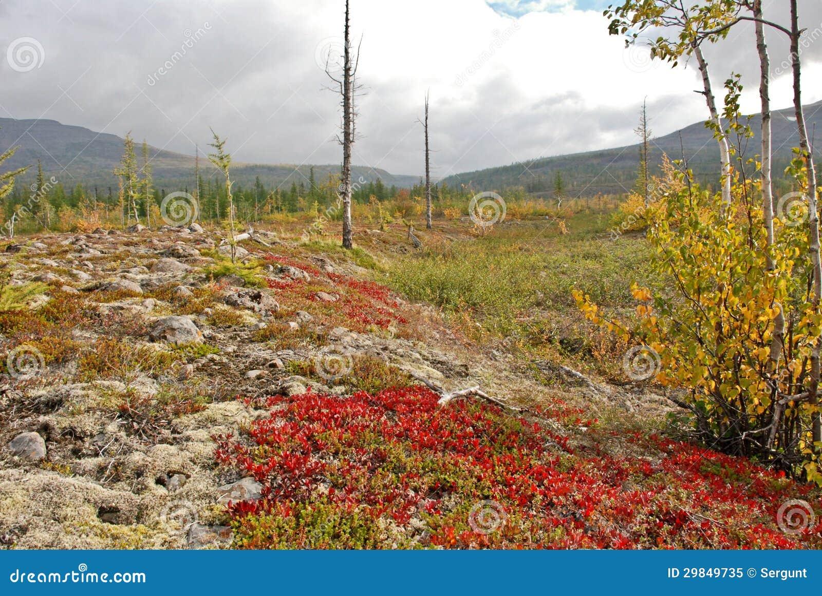 Ζωηρόχρωμο tundra.