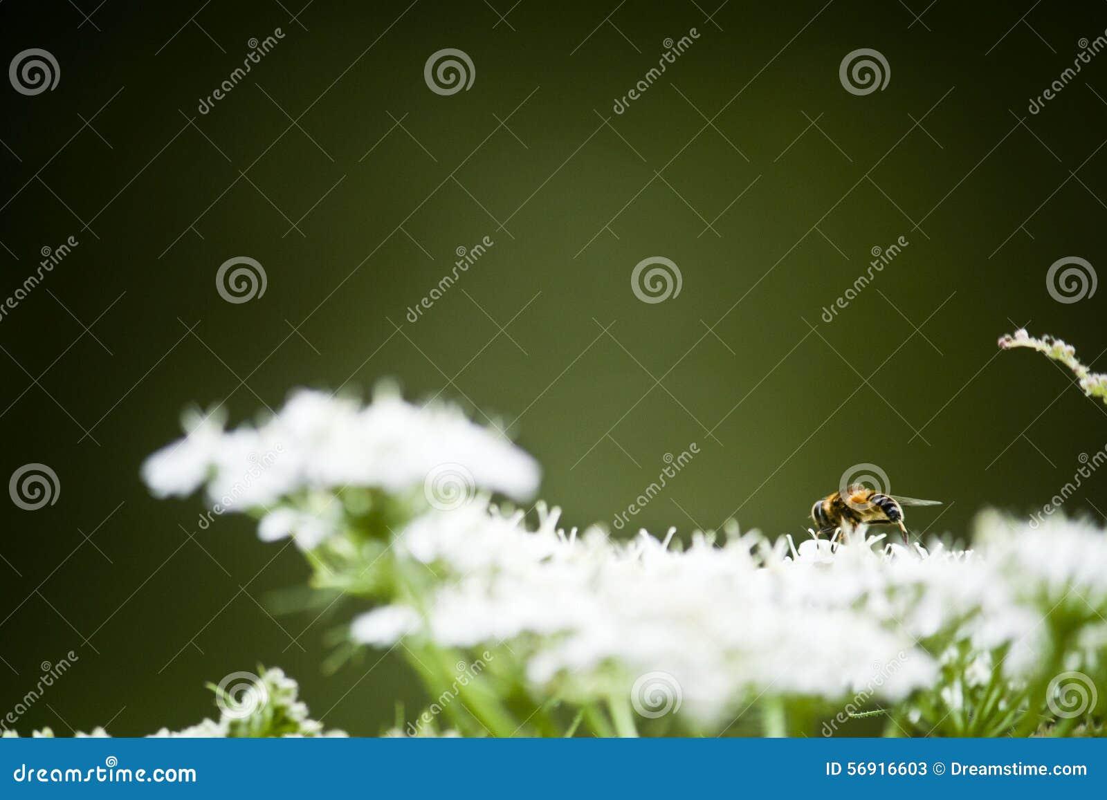 Το ταξίδι μιας μέλισσας