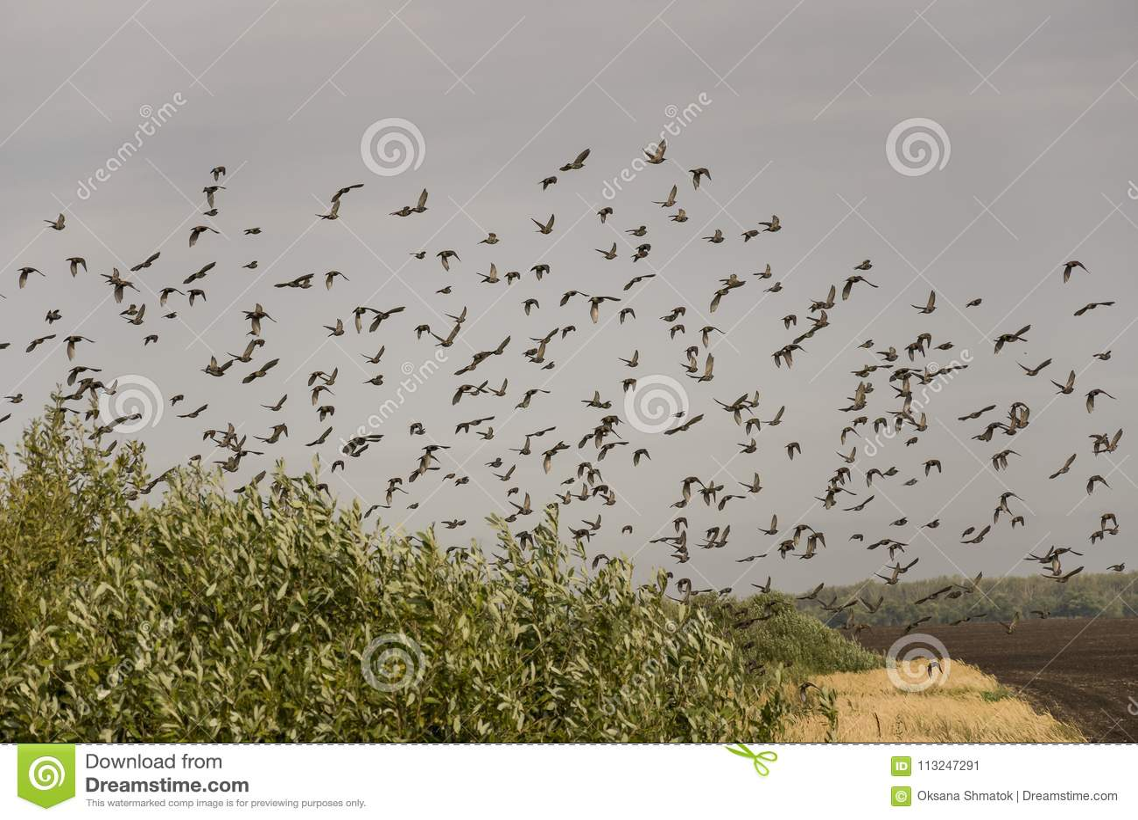 μαύρο πουλί τεράστια σέξι παιχνίδια Χεντάι πορνό