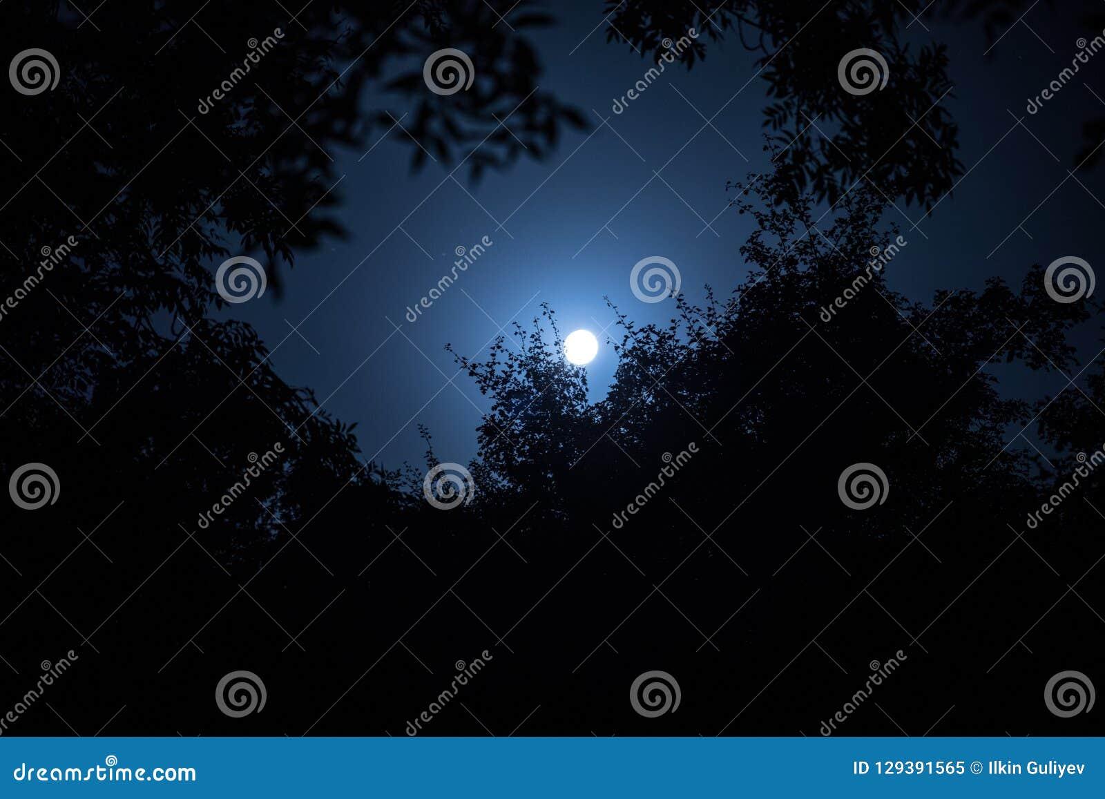Το τοπίο νύχτας του ουρανού και το έξοχο φεγγάρι με το φωτεινό σεληνόφωτο πίσω από τη σκιαγραφία του δέντρου διακλαδίζονται Υπόβα