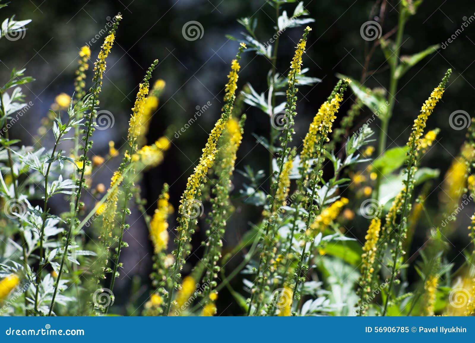 Το υπόβαθρο των λουλουδιών