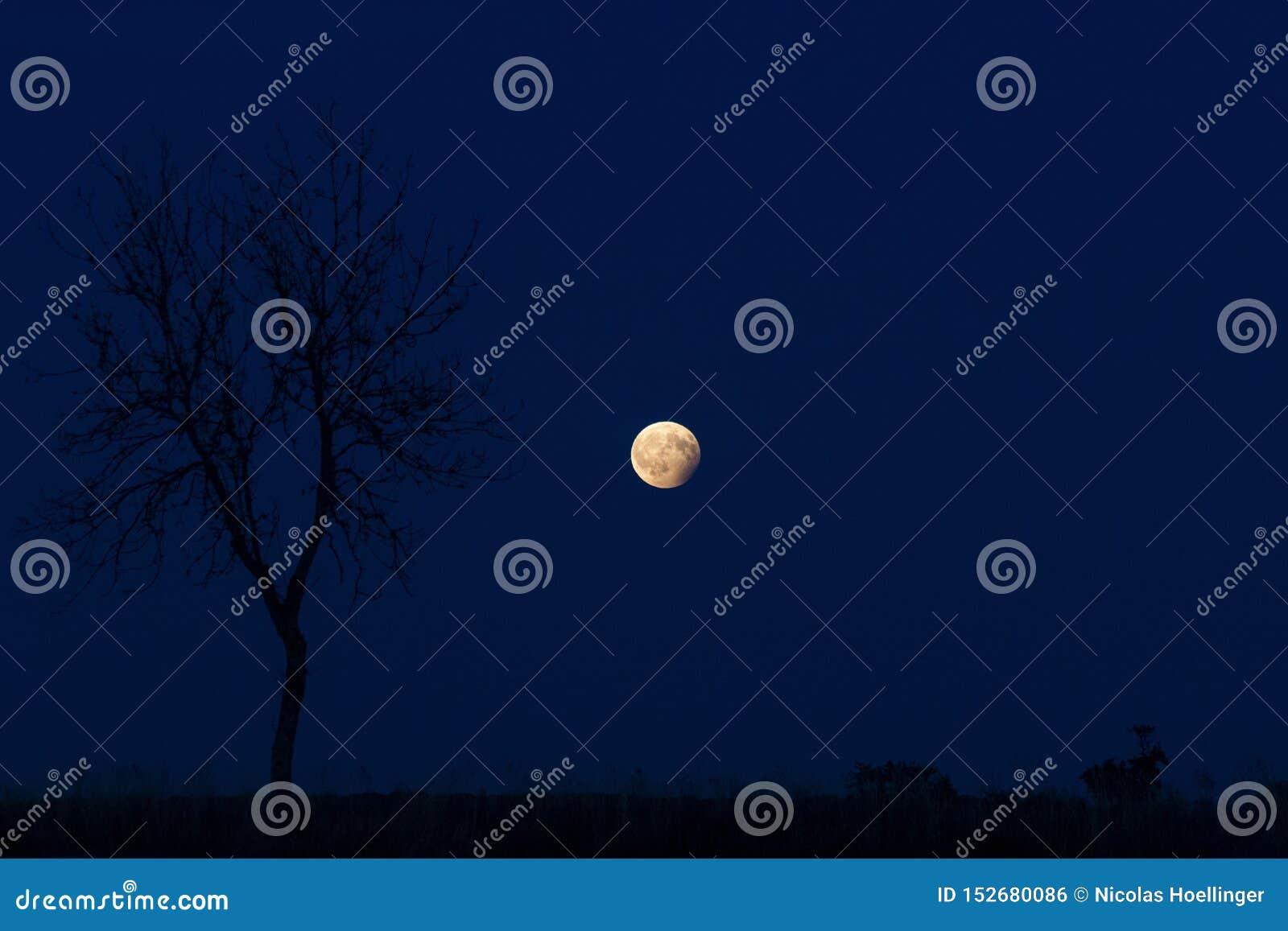 Το φεγγάρι στην μπλε νύχτα