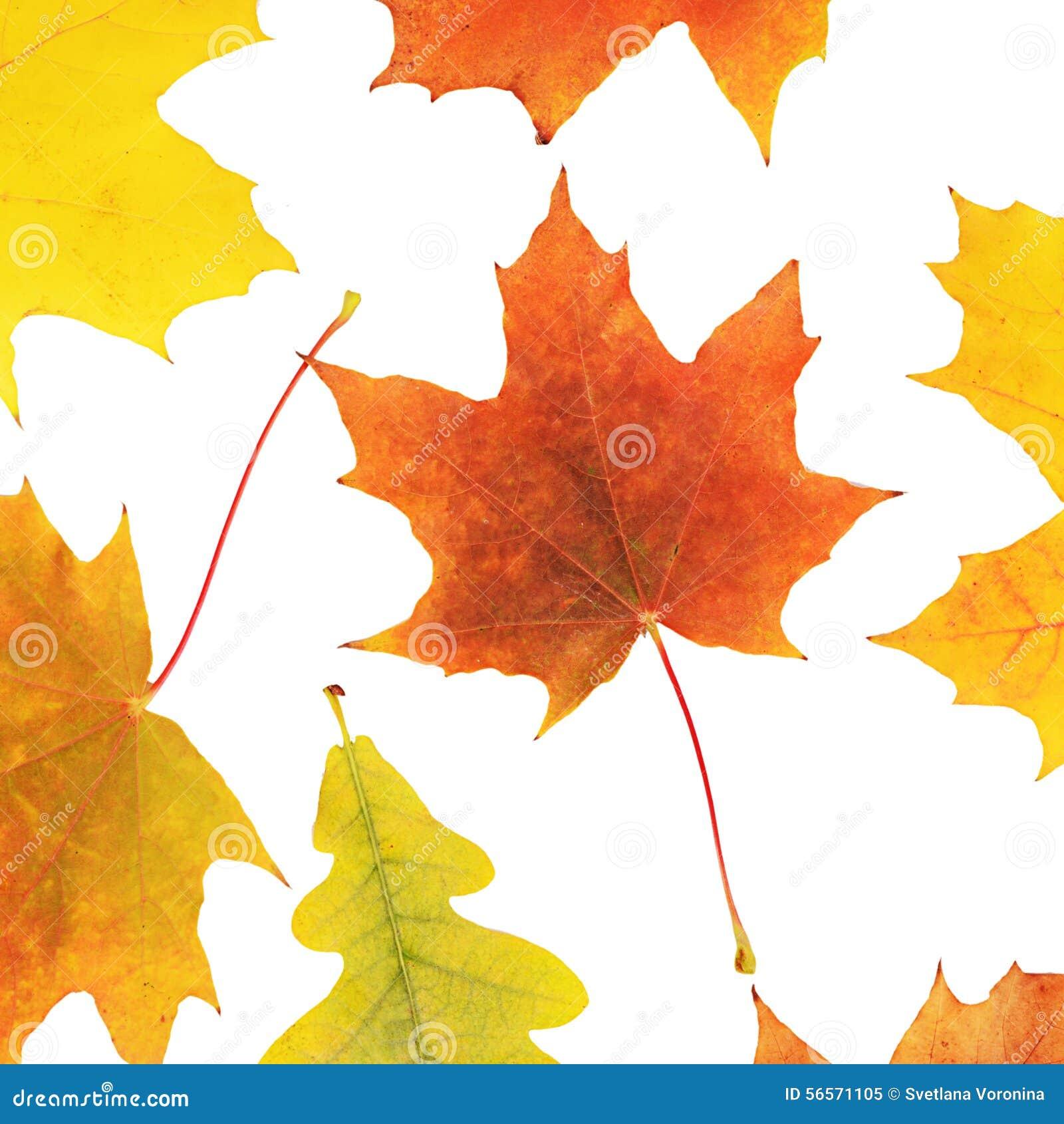 Download το φθινόπωρο απομόνωσε τ&omicron Στοκ Εικόνα - εικόνα από ομάδα, πράσινος: 56571105