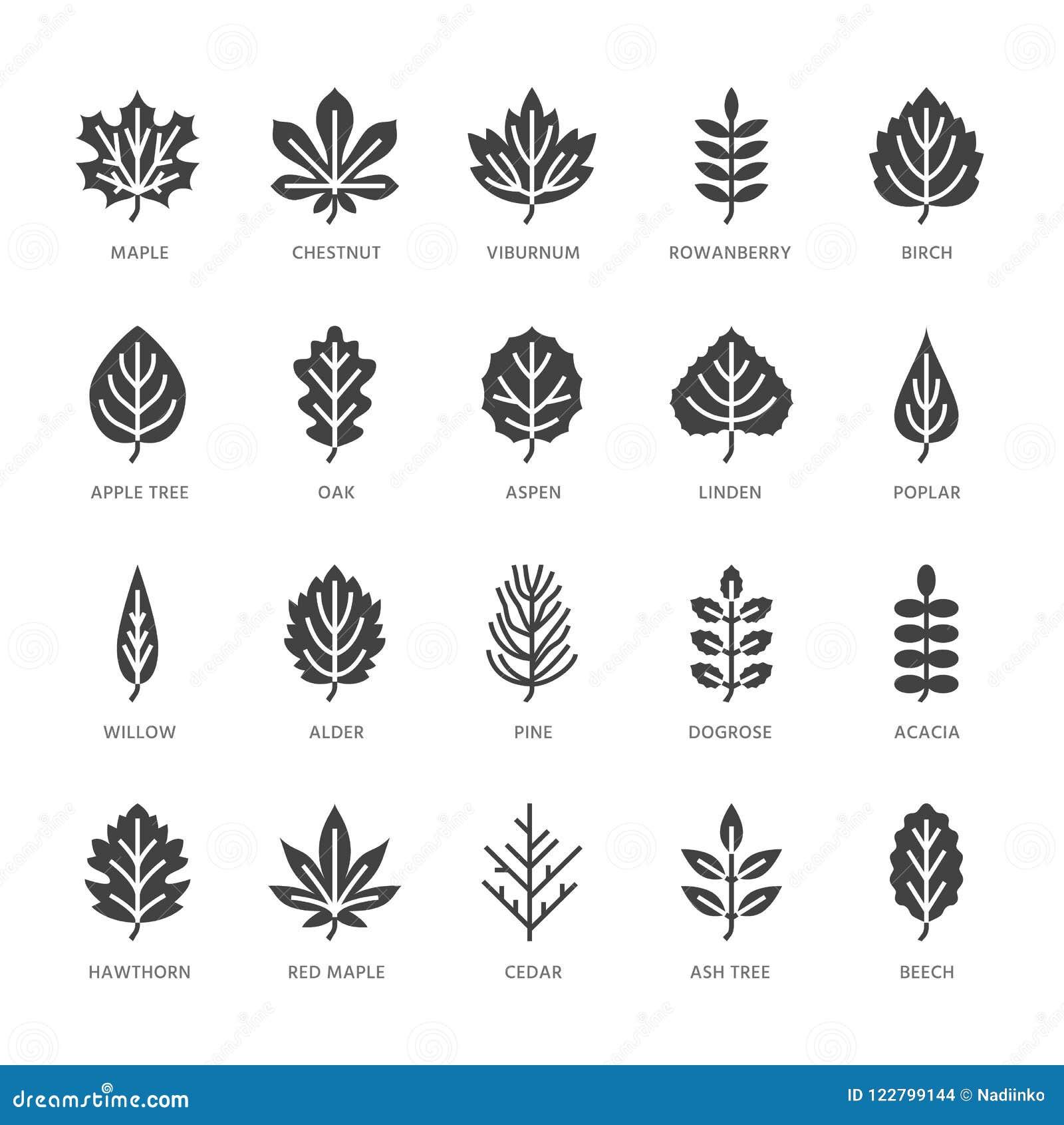 Το φθινόπωρο αφήνει τα επίπεδα εικονίδια glyph Οι τύποι φύλλων, σορβιά, δέντρο σημύδων, σφένδαμνος, κάστανο, βαλανιδιά, πεύκο κέδ