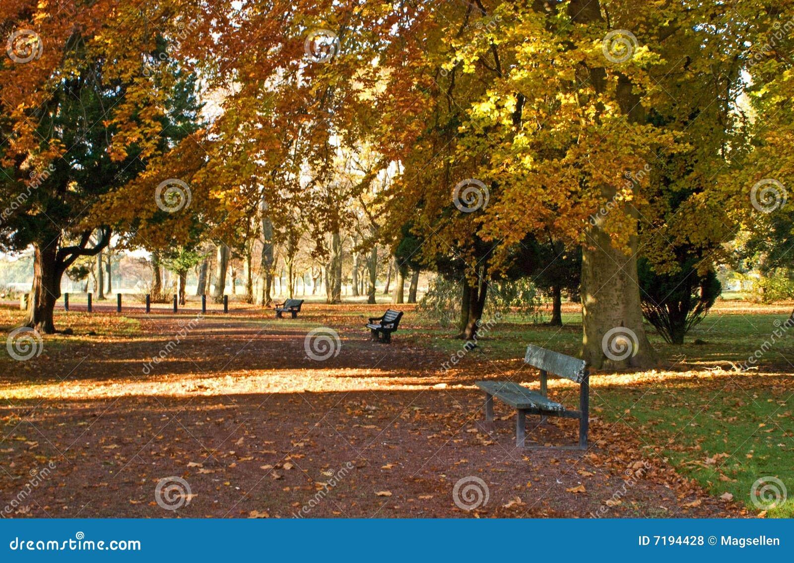 το φθινόπωρο βγάζει φύλλα