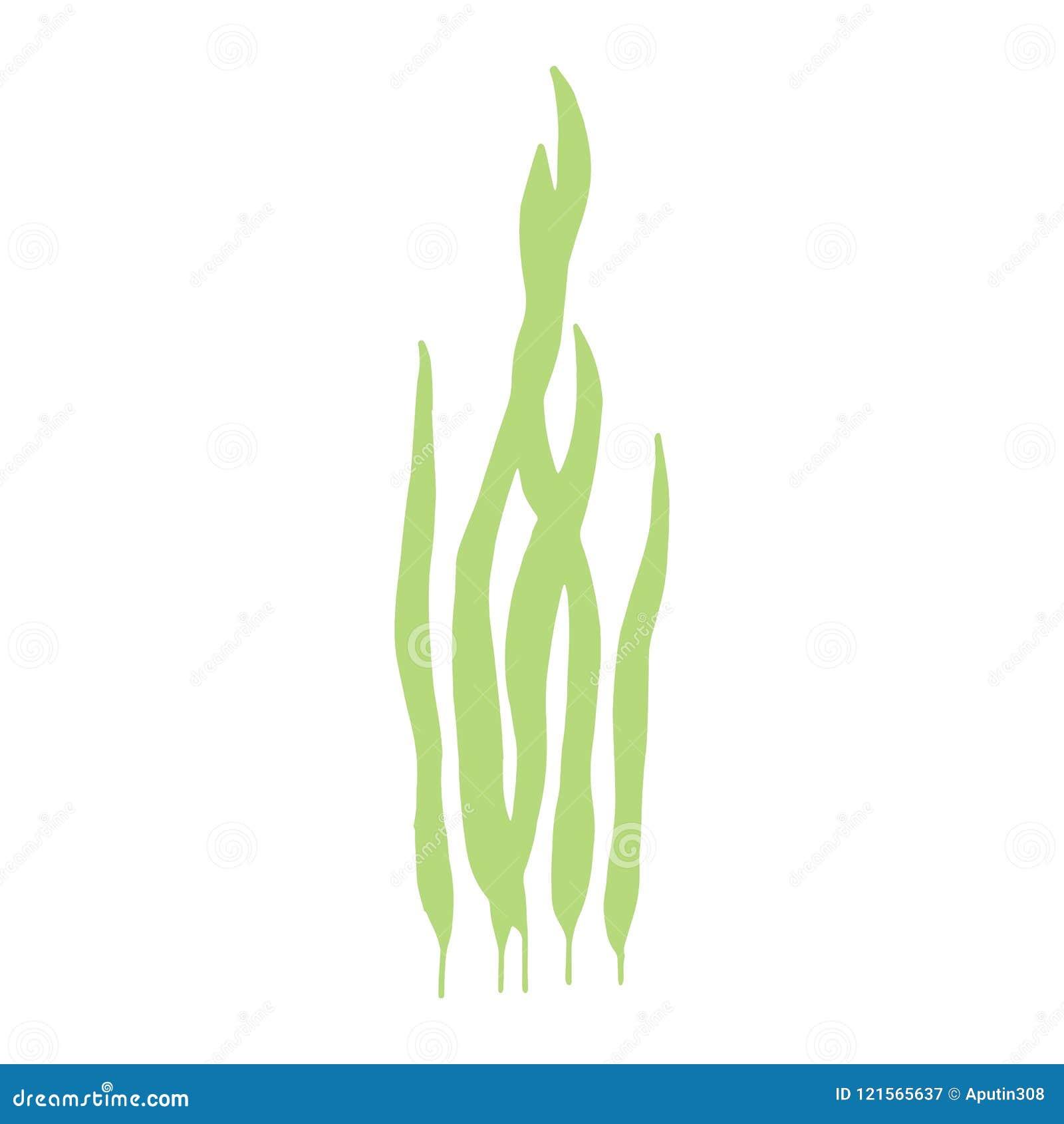 Το φύκι είναι απομονωμένη χειροποίητη εικόνα διάνυσμα στο άσπρο backgroun