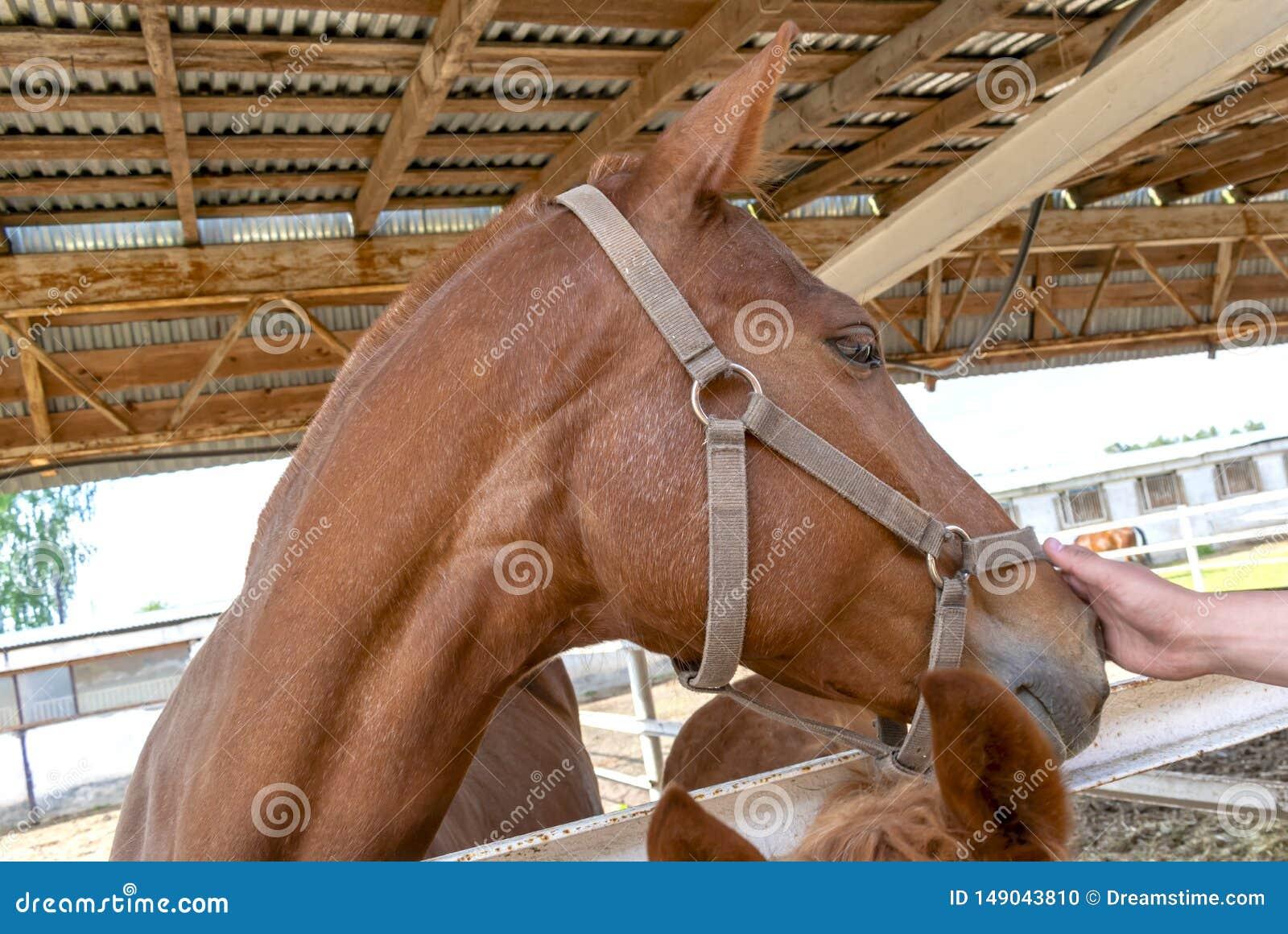 Το χέρι κτυπά ένα καφετί άλογο στο πρόσωπο