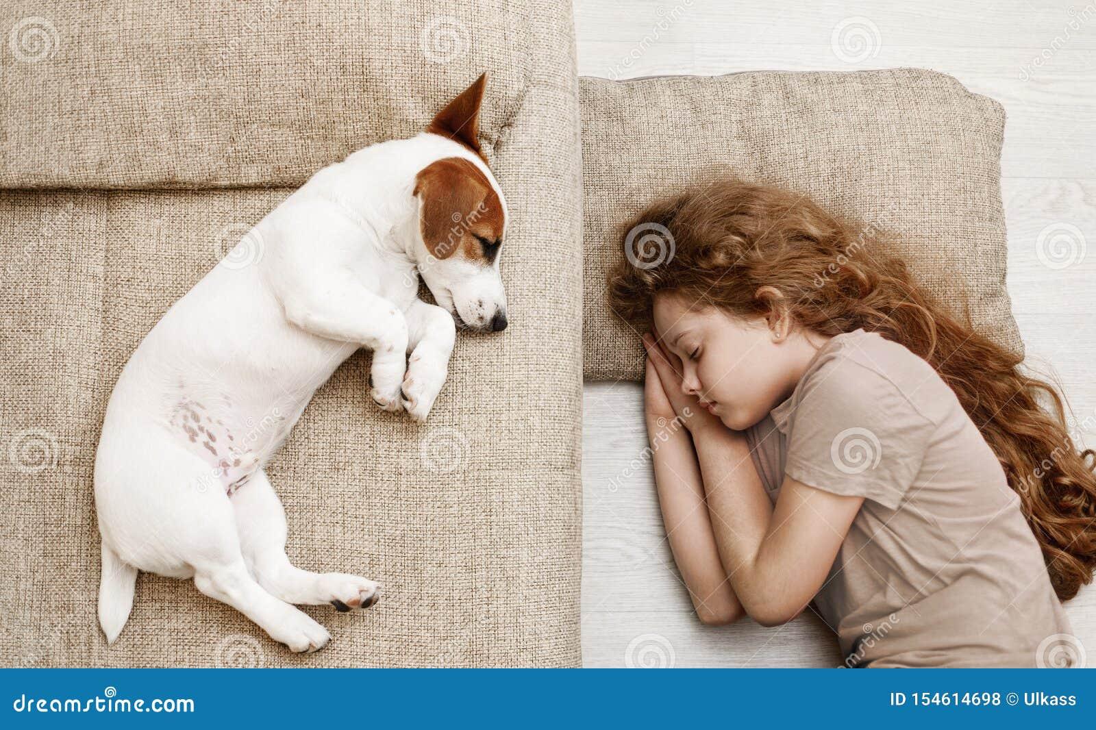 Το χαριτωμένο κουτάβι κοιμάται στο κρεβάτι
