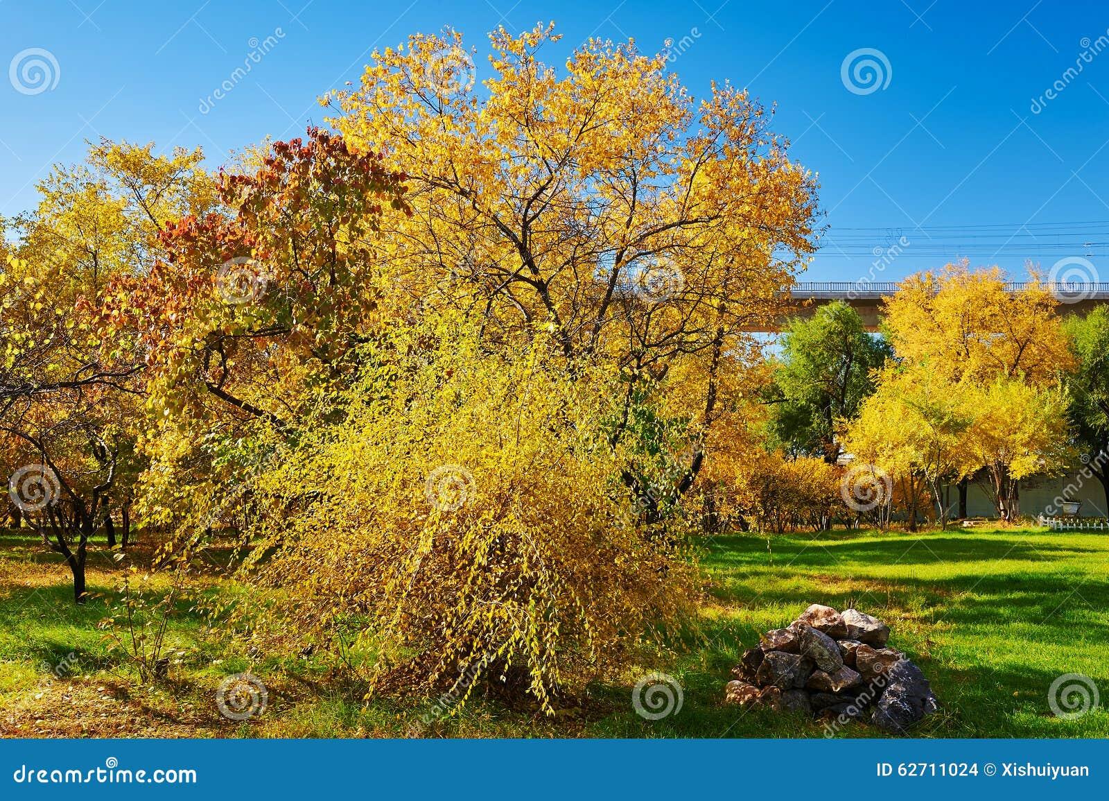 Το χρυσό τοπίο φθινοπώρου