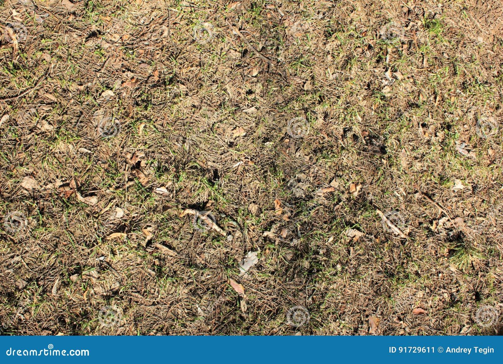 Το χώμα στο δάσος