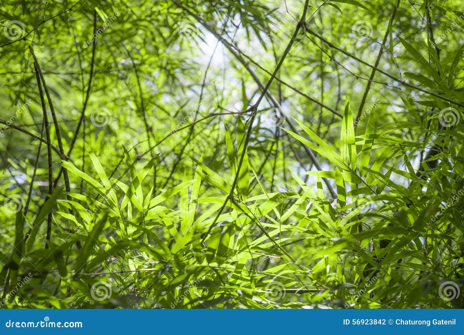 Το Blured, μπαμπού πράσινο βγάζει φύλλα το υπόβαθρο