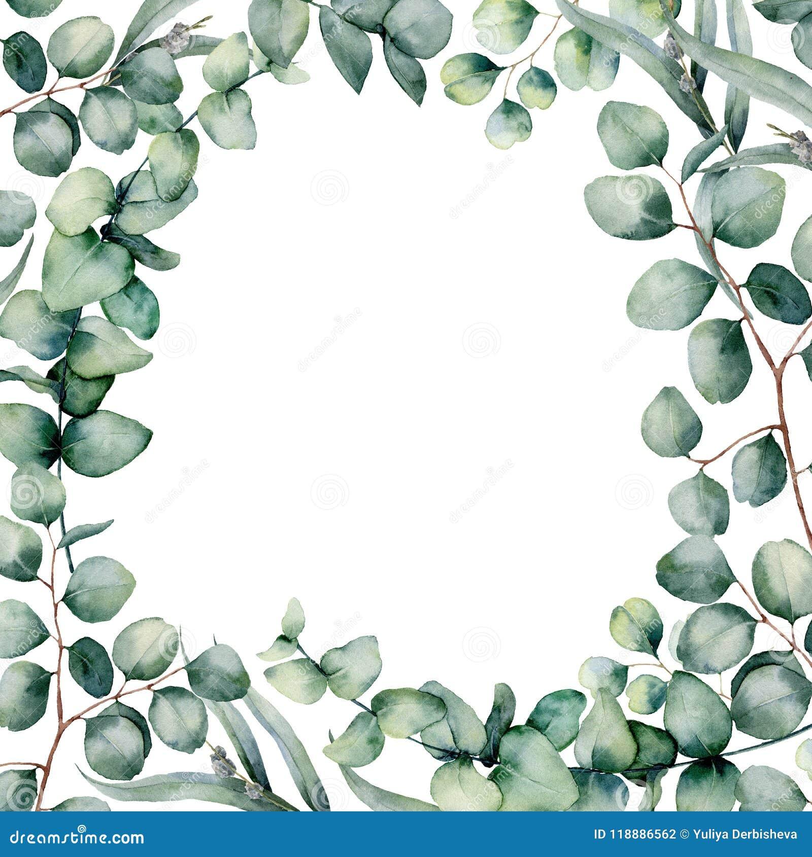 Το eucaliptus Watercolor αφήνει το πλαίσιο Το χέρι χρωμάτισε το σπαρμένη και ασημένιας δολαρίων ευκαλύπτων κλάδο μωρών, που απομο