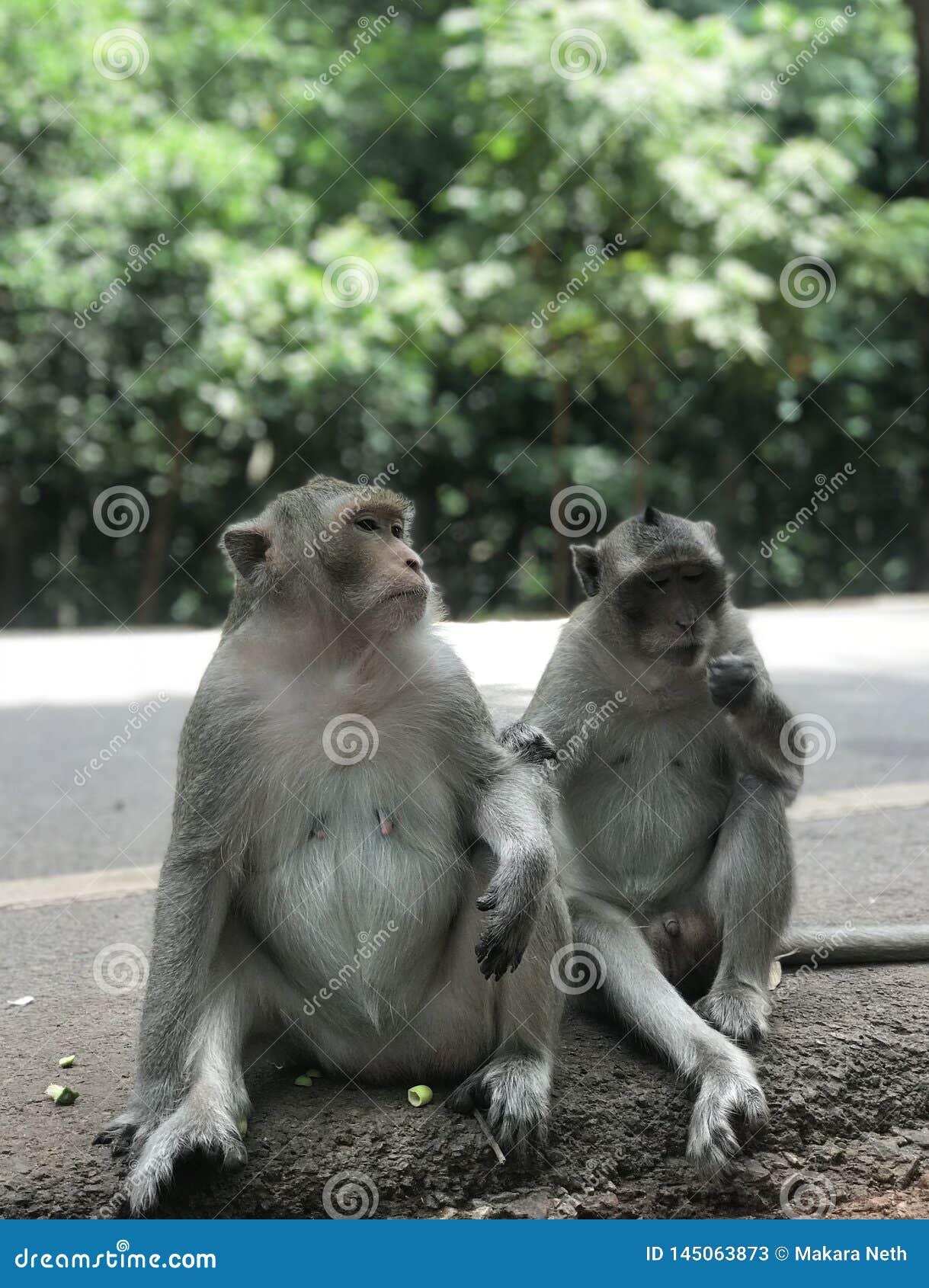 Το Macaque σε Angkor Wat