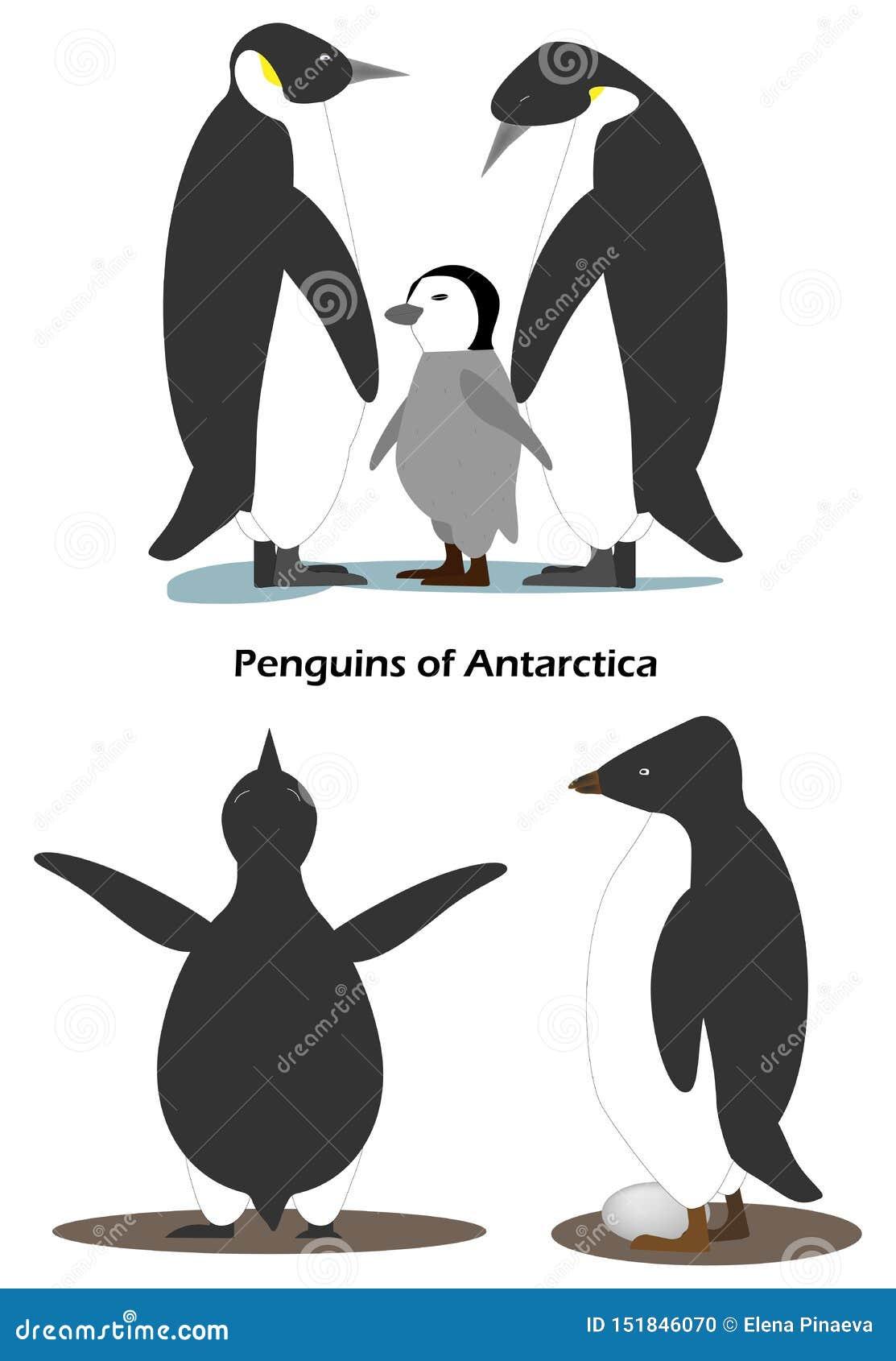 Το Penguin Aptenodytes είναι οικογένεια με cub Adeliae Pygoscelis Penguin με το αυγό Ανταρκτικά ζώα