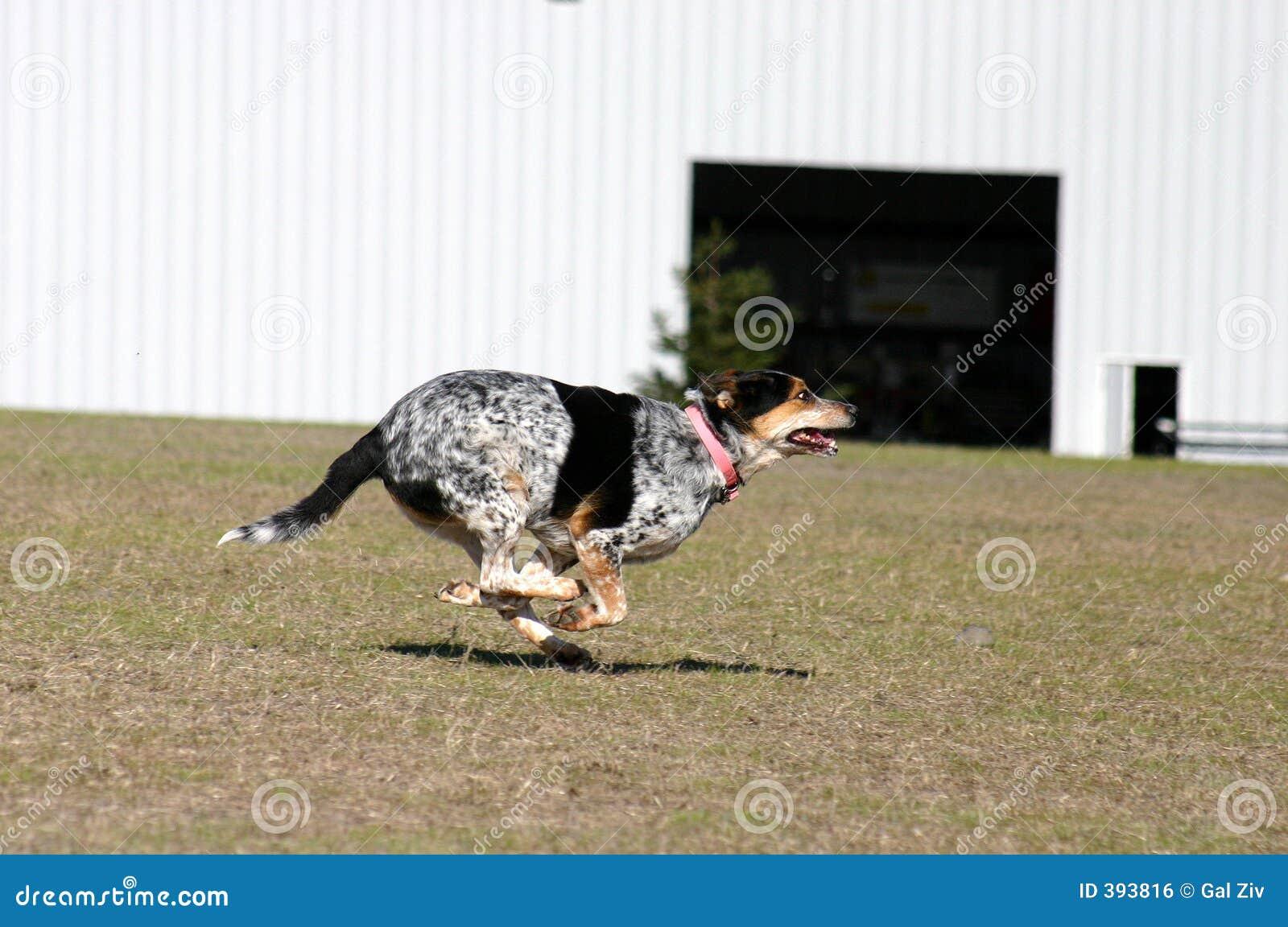 τρέξιμο διασκέδασης