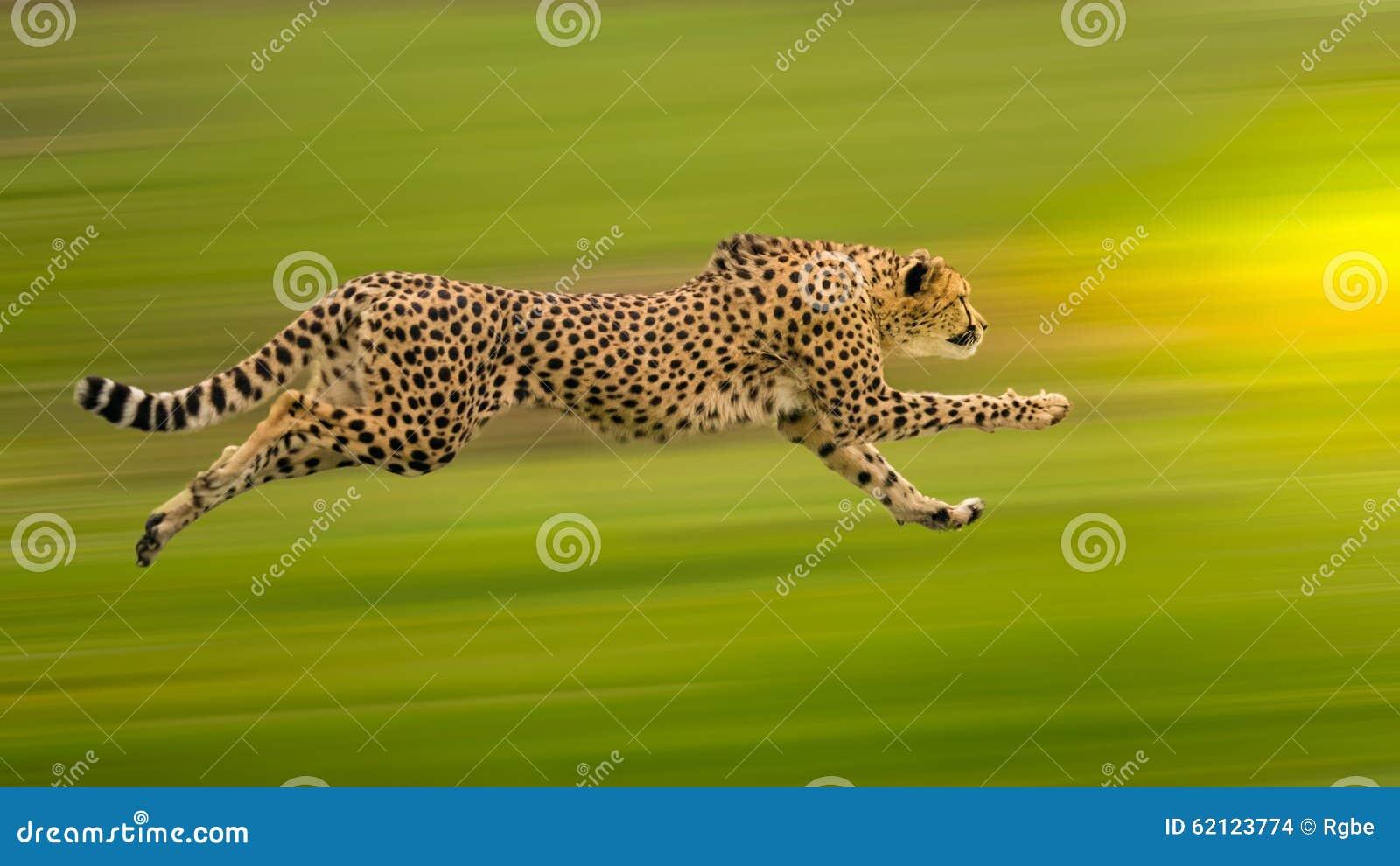 Τρέξιμο τσιτάχ