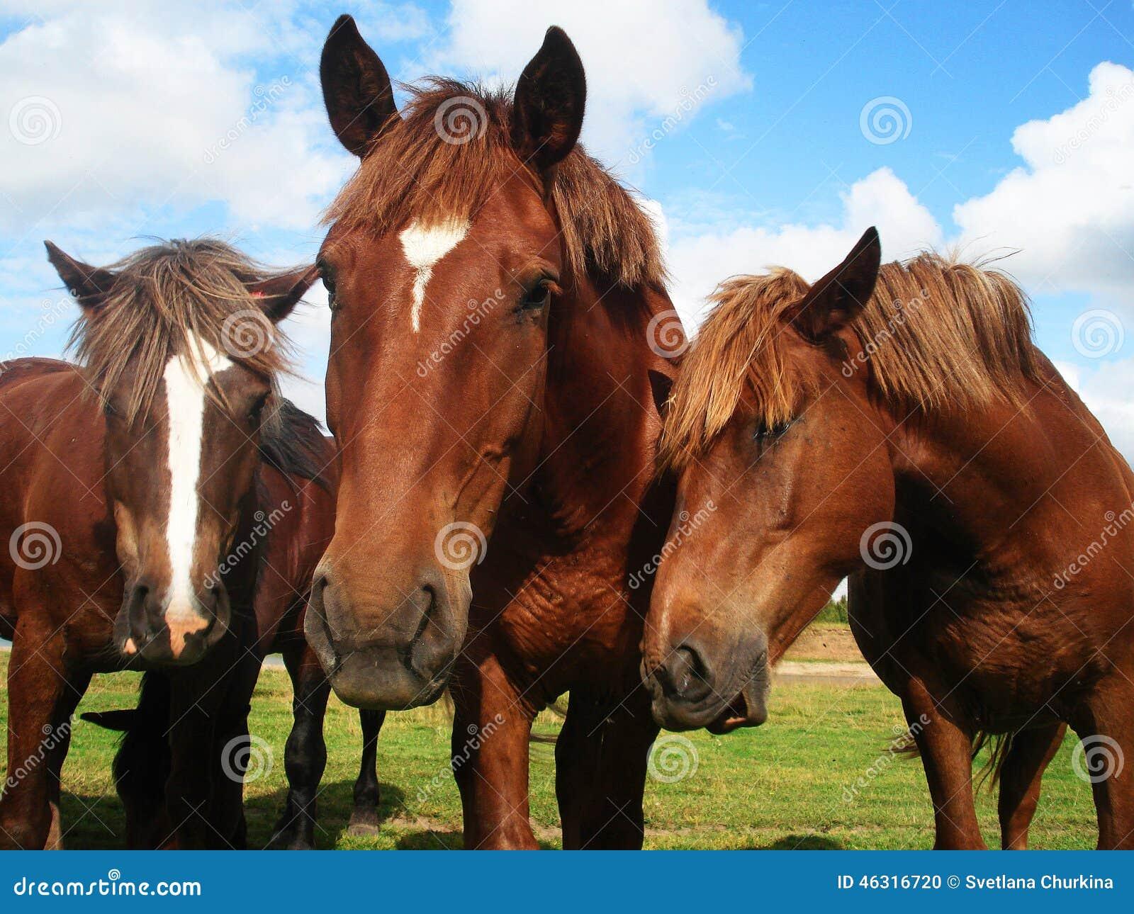 Τρία άλογα