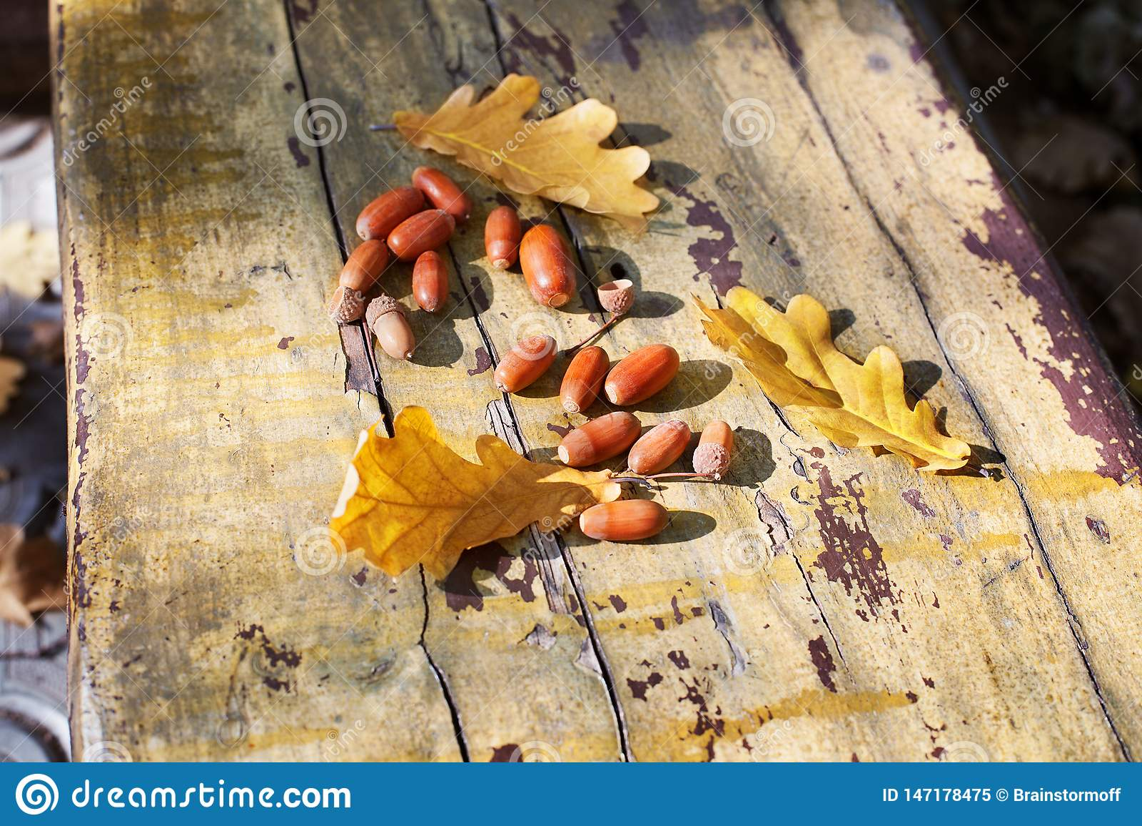 Τρία πεσμένα κίτρινα δρύινα φύλλα δέντρων και κόκκινα βελανίδια στο παλαιό ξύλινο υπόβαθρο πινάκων κοντά επάνω, χρυσό φύλλωμα φθι