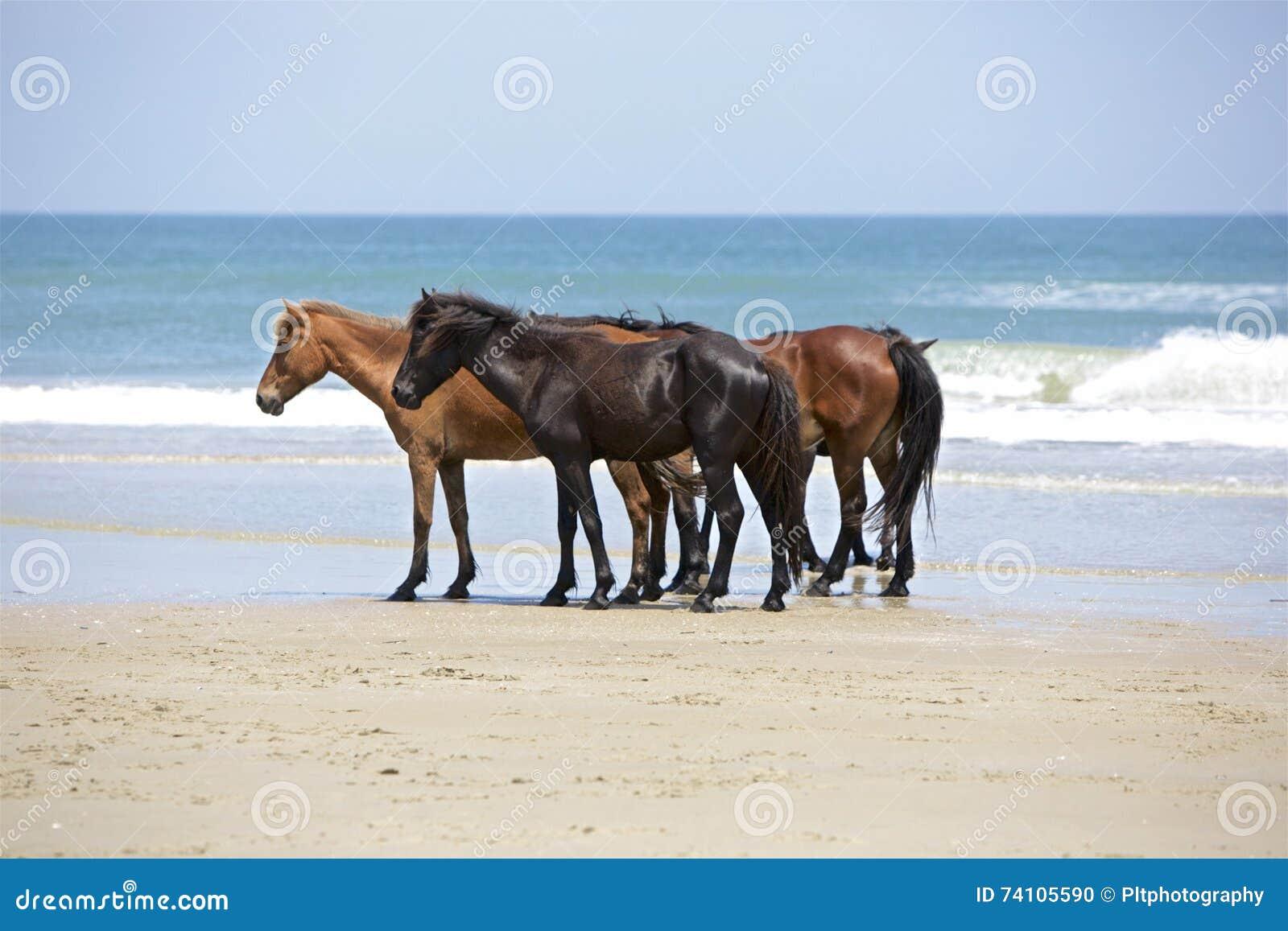 Τρία σε μια παραλία