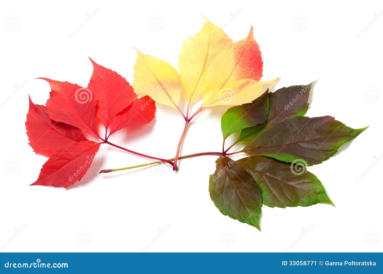 Τρία φύλλα των διαφορετικών εποχών που απομονώνονται στο άσπρο υπόβαθρο