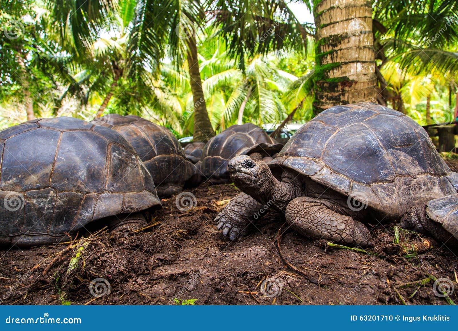 Τρεις γιγαντιαίες χελώνες