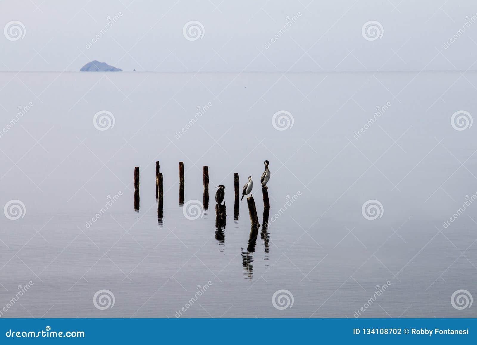 Τρεις κορμοράνοι εσκαρφάλωσαν στους πόλους που προκύπτουν από το επίπεδο νερό